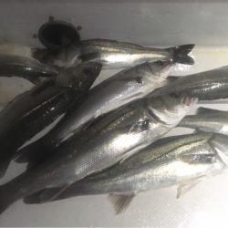 FEEDLOT 釣果