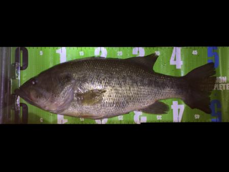 夜釣りで50up!!