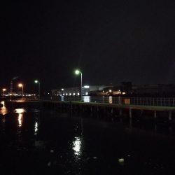 南港フェリーターミナルのヘチ釣り(小キビレ他釣果)