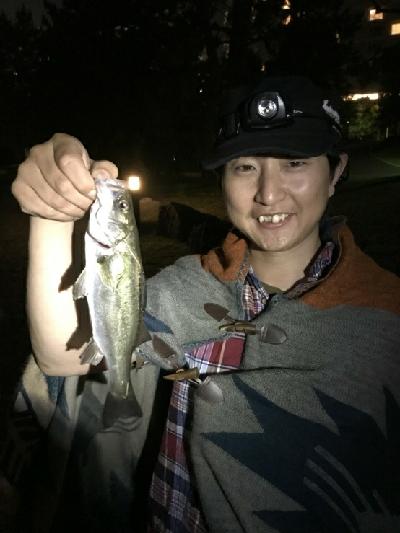 お台場で夜釣り