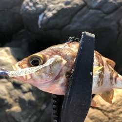 根魚祭り!