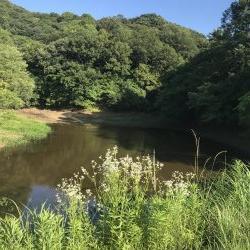 海まで行かず野池に久し振りに行って来ました。
