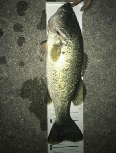 夜釣りやばい!!