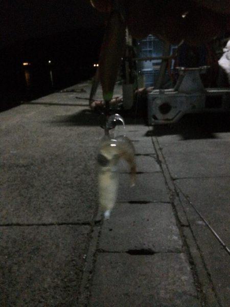室津港(兵庫県) 陸っぱり 釣り・魚釣り   釣果情報サイト カンパリ