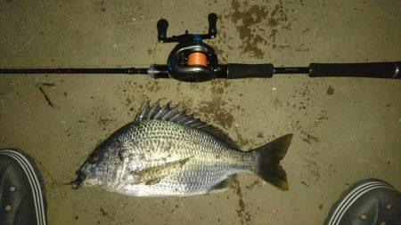 釣れ始めました