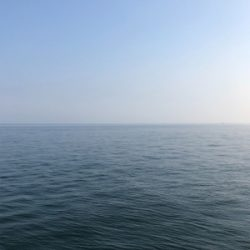 ツバス、惜しくも海へ帰る…