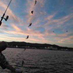 アナゴ夜釣り
