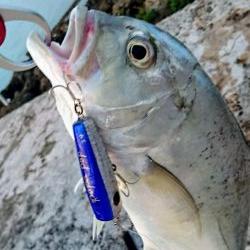 ロウニンアジ、自作のポッパーで釣れました。