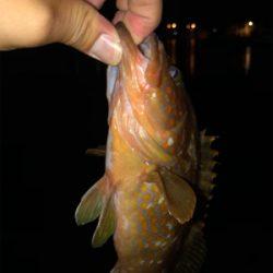 漁港内で釣れました。