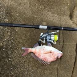 磯でカゴ釣り