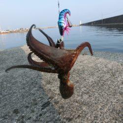 タコ釣りの魅力に夢中! メガバスTACO-Leモニター投稿