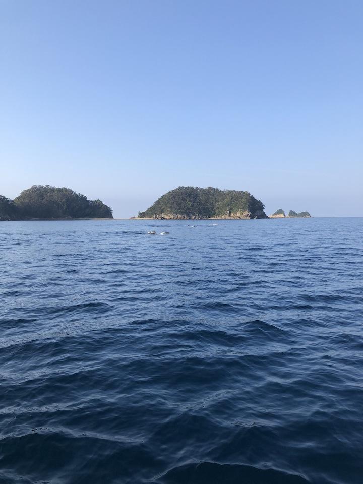徳島県南近海オフショア近況