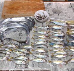 小アジ、タチウオ釣り