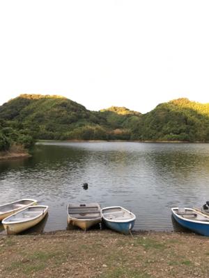 大幅減水の桜池