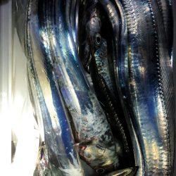コスモスクエア台風前の太刀魚