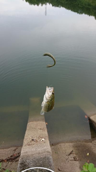 リザーバー釣行