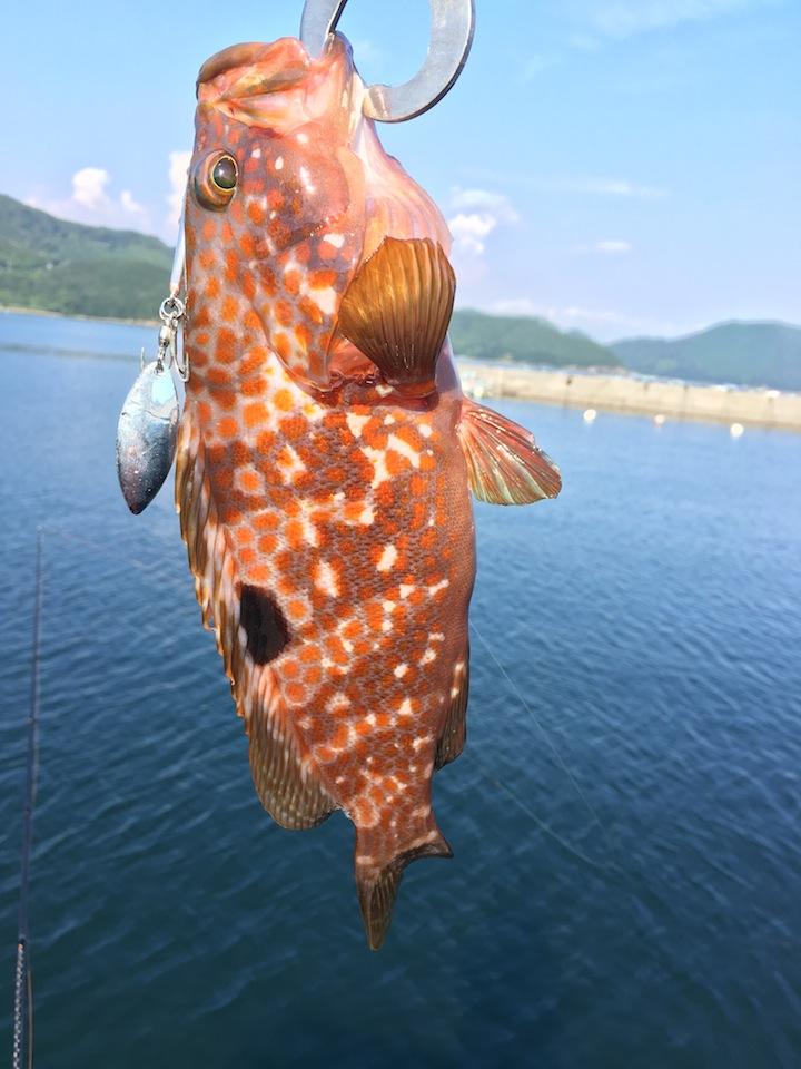 愛媛県愛南町~高知県大月町漁港周りロックフィッシュを求めて