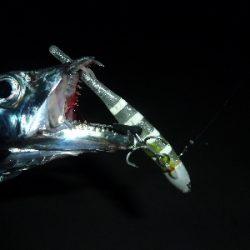ヤッパリ太刀魚