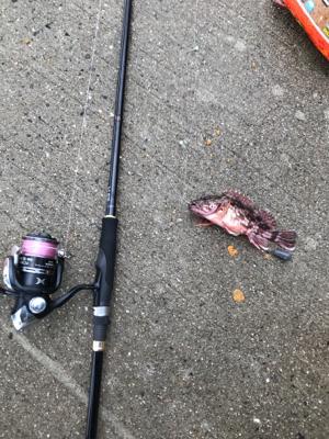 残敗カワハギ釣り