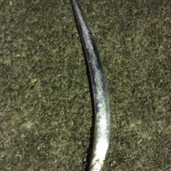 なんとか太刀魚…