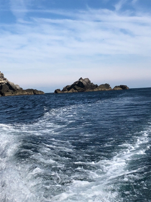 大島グレ釣行