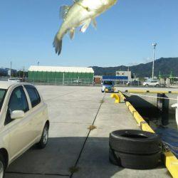 【苅田港】シーバス調査2