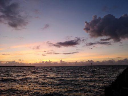台風明け 早朝トップでゴマフエダイ