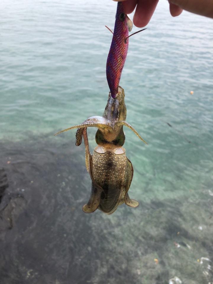 佐賀県エギング釣行