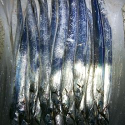 太刀魚いっぱい釣れた(^^)