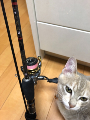 小アジ釣れています。