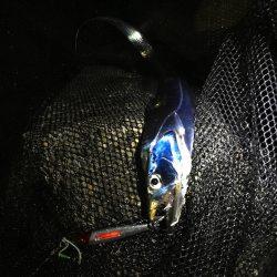 ラトルスティック装着で好反応のサゴシ・アジ・サバ、ケミホタル装着でタチウオはガンガンアタック LUMICAメタルジャッカー新色インプレッション