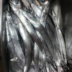 ハーフピッチジャークがよくあたって満足の釣行に! メガバススラッシュビート 船タチウオレポート