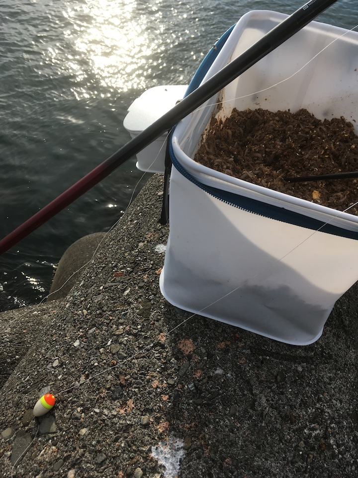 徳島・フカセ釣り事情
