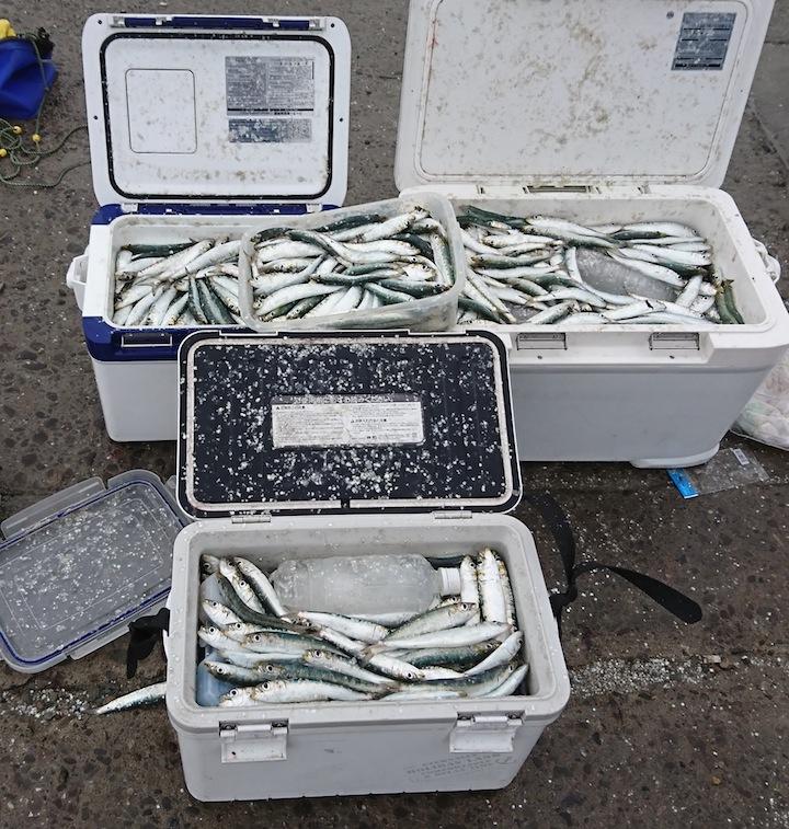 浮きアオリイカ釣り