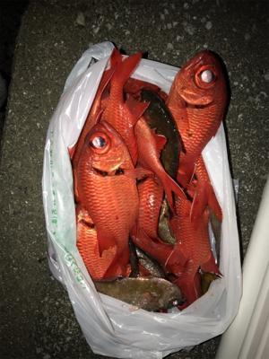釣りの聖地鵜来島遠征釣行