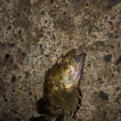 碧南海釣り公園にてヘチ釣り