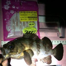 メバル・根魚に好感触!がまかつLUXXE宵姫アジング・メバリングレポート