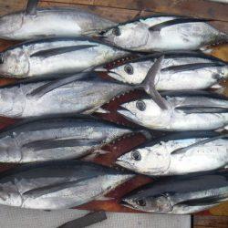 小海途 釣果