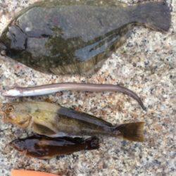 カレイとバラエティな魚たち