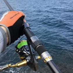 コウイカ釣り