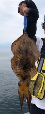 イカに鯛に