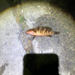 根魚ライトゲーム
