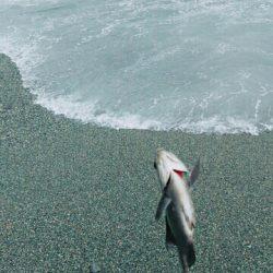 渚釣り 不発