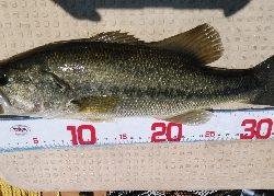 逃した魚は大きかった。。。