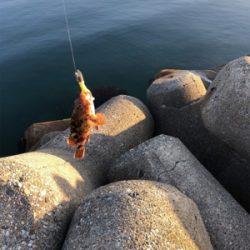 魚が釣りたくて