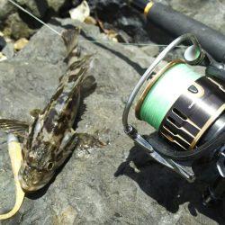 【新門司】根魚調査