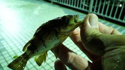 大雨の中でも釣りをする