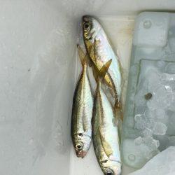 ウキ釣り釣行