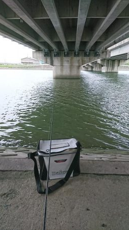 なんでも!釣りたい!