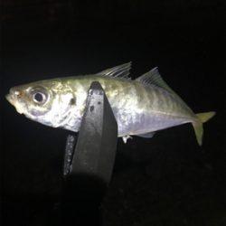 夜釣りから